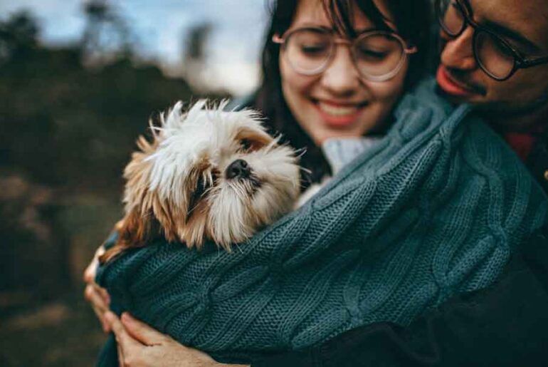 Are Jack Russell Shih Tzu mixes Good for Families?
