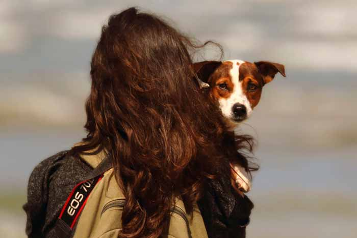 Are Jack Russells good with kids?
